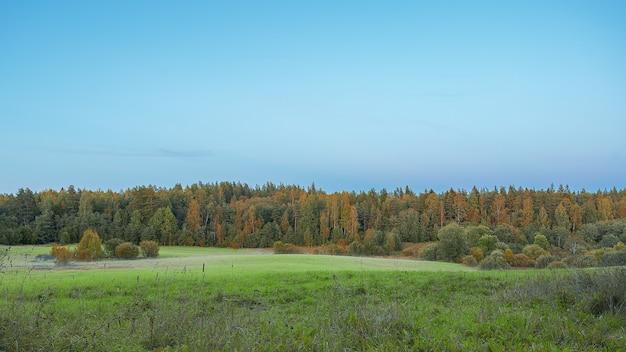 Image d'une forêt d'automne sur fond bleu de la forêt lumière naturelle