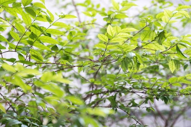 Image gros plan de l'arbre et des feuilles