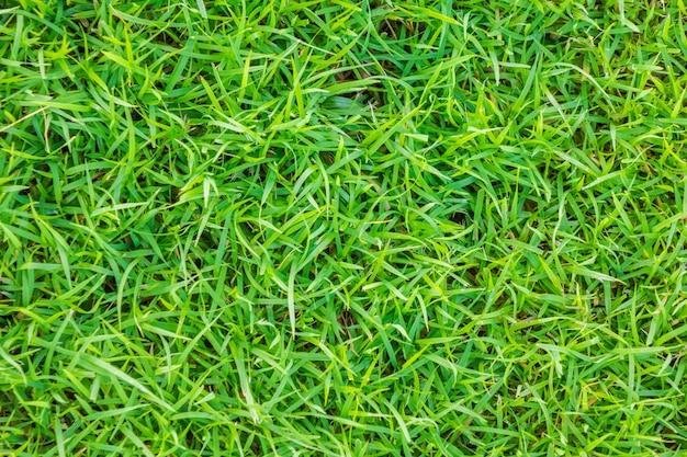 Image en gros plan d'herbe verte printanière.