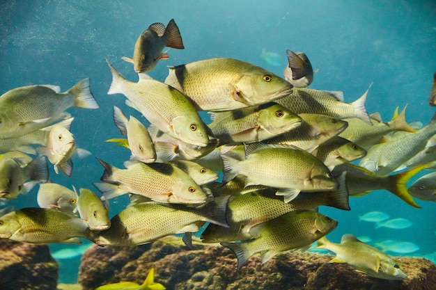 Image de groupe de poissons verts et jaunes nageant dans l'eau