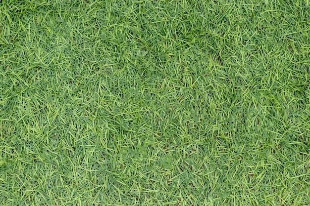 Image d'herbe verte artificielle