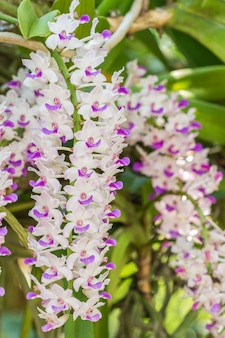 Image de macro d'orchidée blanche et violette
