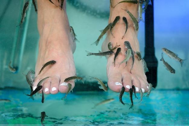 Image de massage des pieds dans un aquarium avec gros plan de poisson
