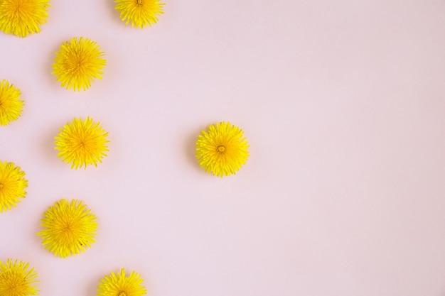 Image de minimalisme avec des fleurs de pissenlits jaunes à plat sur fond de papier rose avec espace de copie.