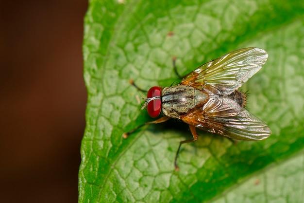 Image d'une mouche (diptera) sur des feuilles vertes. insecte. animal