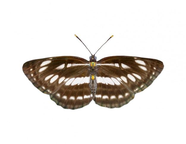 Image de papillon marin ordinaire ordinaire isolé sur fond blanc