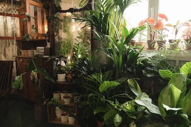 Image d'une pièce domestique avec une grande quantité de plantes vertes en pot et de fleurs autour