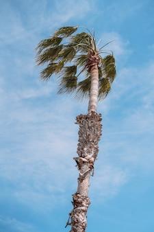 Image de plantes et de palmiers