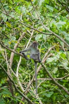 Cette image raconte un singe à longue queue assis sur une branche d'arbre