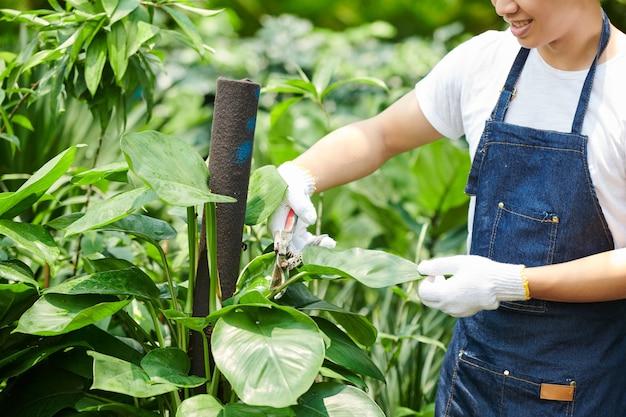 Image recadrée jeune homme élaguant des feuilles luxuriantes de plante dans un centre de jardinage