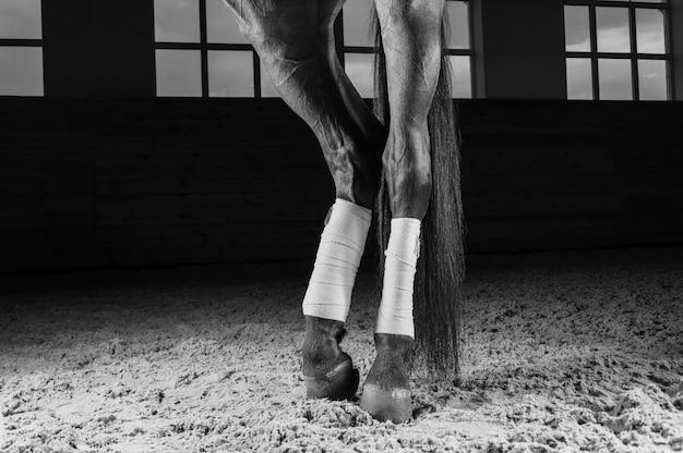 Image des sabots bandés d'un cheval pur-sang. concept de préparation à la compétition. technique mixte