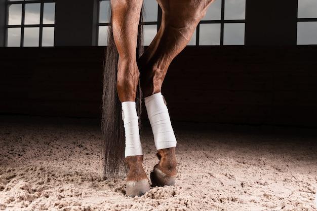 Image des sabots bandés d'un cheval pur-sang. concept de préparation à la compétition.
