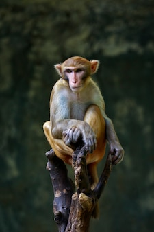 Image de singe assis sur une branche d'arbre. animaux sauvages.