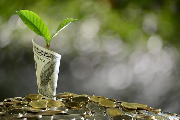 Image d'un tas de pièces de monnaie et d'un billet de banque roulé avec une plante au-dessus montrant les affaires