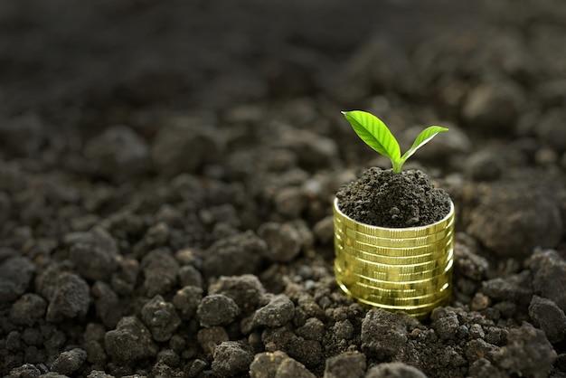 Image de tas de pièces de monnaie avec la plante sur le dessus pour les entreprises