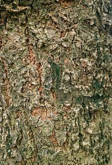 Image verticale de l'écorce d'arbre rugueux patiné