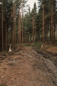 Image verticale de pins dans la forêt