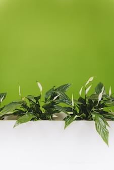 Image verticale des plantes d'intérieur de lis de paix