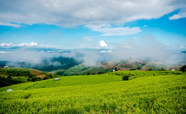 Images de paysage de nuages blancs, ciel bleu et brouillard dans la matinée couvrent les rizières et la montagne