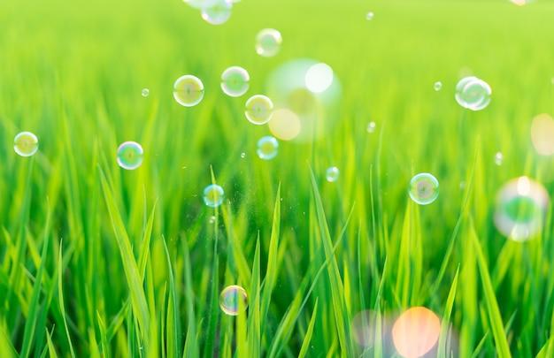 Images de plantes vertes, de printemps et de bulles