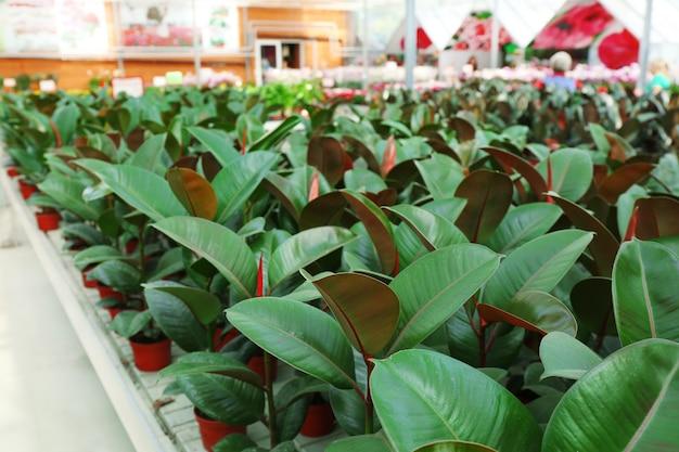 Immense serre avec beaucoup de fleurs et de plantes à vendre