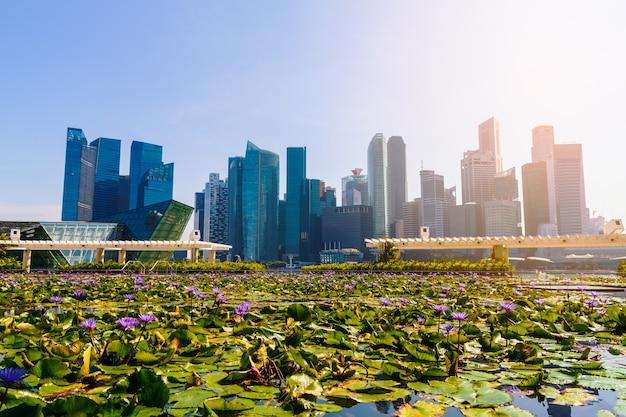 Immeubles de grande hauteur et étang de lotus.