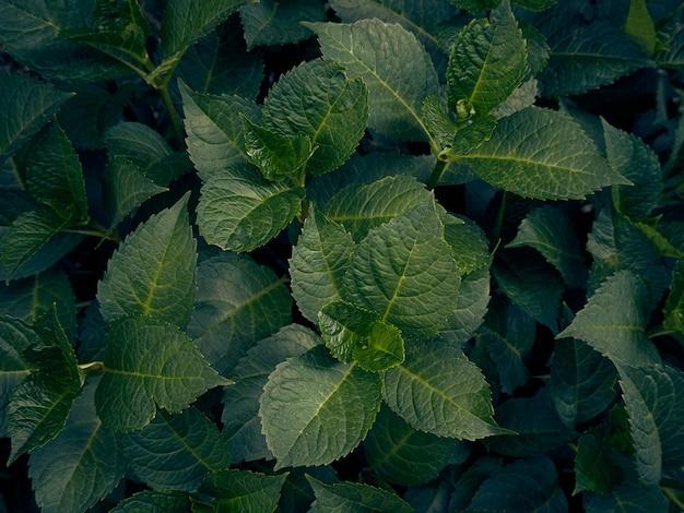 Impression de fond de feuilles vertes.