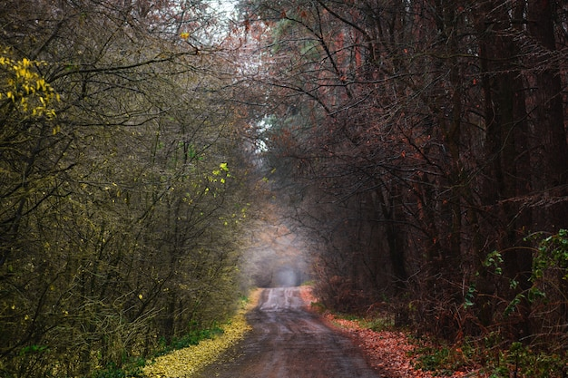 Incroyable chemin de tunnel d'automne à travers une forêt colorée