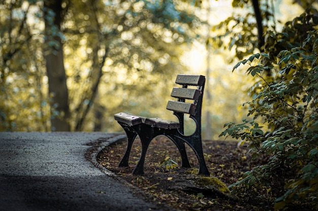 Incroyable coup d'un banc en bois dans un parc d'automne