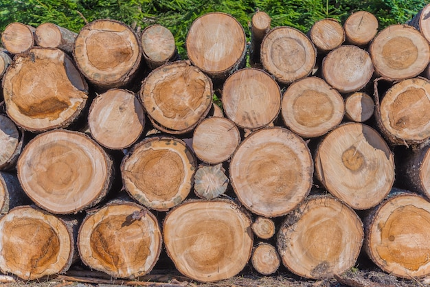 Industrie du bois d'oeuvre