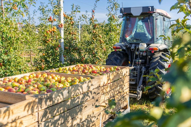 Industrie de production de jus de verger de pommier, agriculture de plantes de récolte d'automne