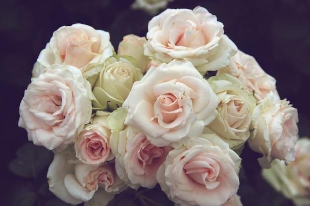 Inflorescence de roses rose clair. bouquet de fleurs de jardin sur un fond sombre.