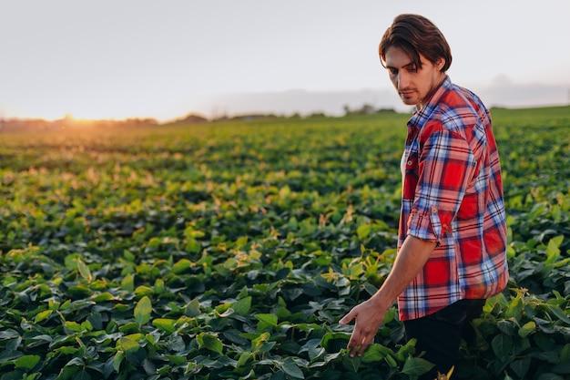 Ingénieur agronome dans un champ prenant en charge le rendement touche une plante.