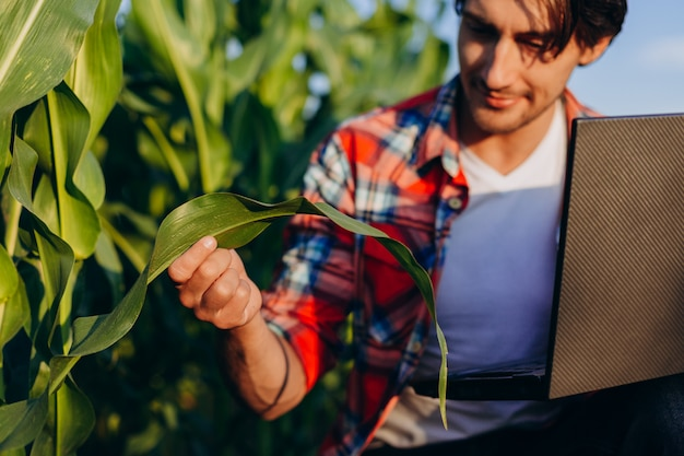 Ingénieur agronome dans un domaine prenant le contrôle du rendement et regardant une plante avec un ordinateur portable