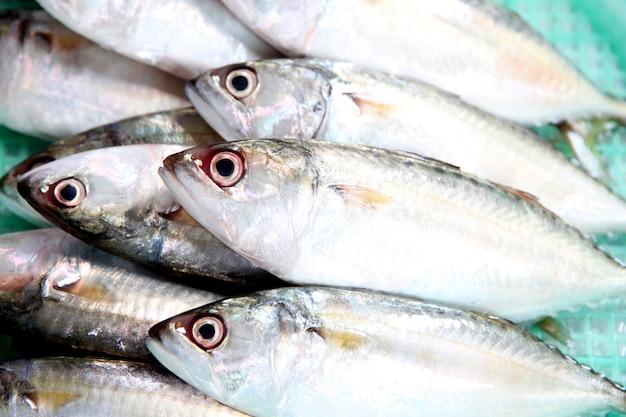 Ingrédient poisson maquereau frais.
