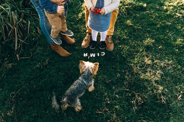 L'inscription d'un chien et de pattes de zibeline dans la nature sur l'herbe