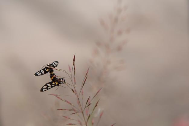 Insecte amoureux de l'arrière-plan flou.
