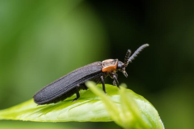 Insecte sur feuille verte