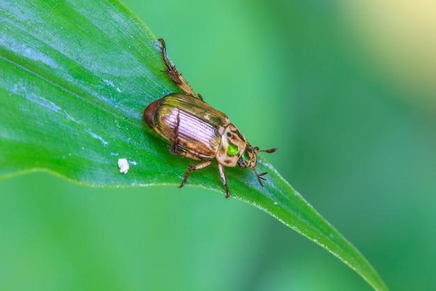 Insecte sur feuille