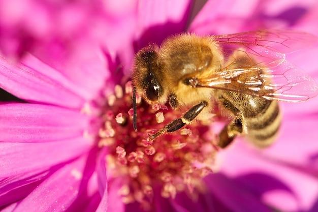 Insecte miel fleur fleurir plante abeille