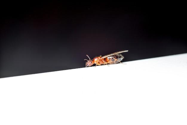 Insecte mouche
