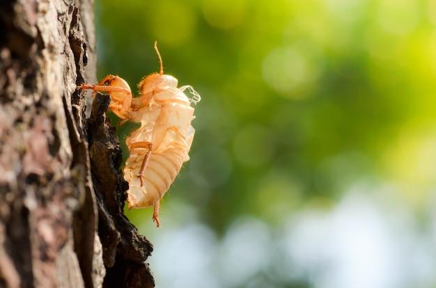 Insecte mue avec un arbre