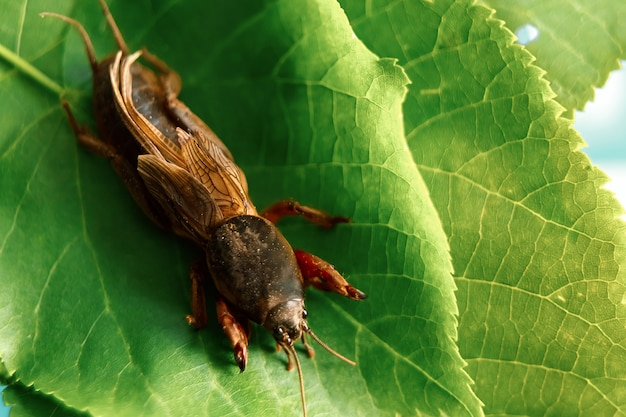 Insecte nuisible, ongreen, feuille, gros plan, un, insecte, ours