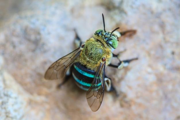 Insecte sur pierre