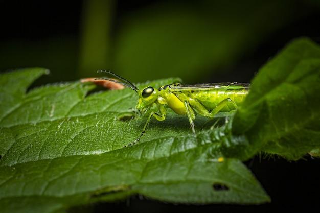 Insecte vert assis sur une feuille verte