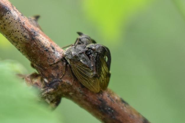 Insectes sur une branche d'arbre dans la forêt