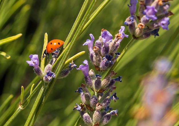 Insectes coccinelle et libellule