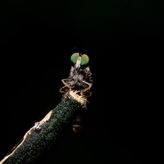 Les insectes sont sur les branches noires.