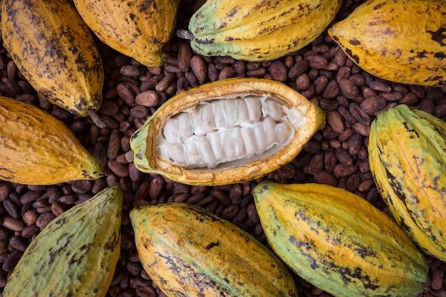Installation de gousses et de fèves de cacao mûres sur fond en bois rustique