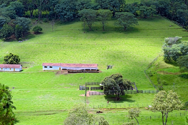 Installations d'une ferme typique de l'état de sao paulo